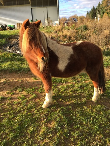 INDIANA - ONC poney typée shetland présumée née en 2000 - adoptée en juillet 2013 - Page 3 411