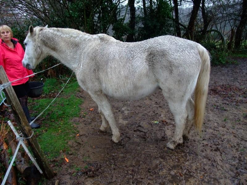FOREVER (notre mascotte) - Connemara X SF né en 1994 - adopté en novembre 2009 par sophie-france - Page 2 Bureau19