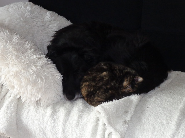 MYSTIQUE (ex-ONDINE) - chatte femelle, née 2014 - (PASCANI) - adoptée par Emilie B. (dpt 69) - Page 4 Dsc04410