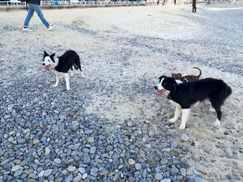 Haïvy et Jumper à la plage  Img_5916