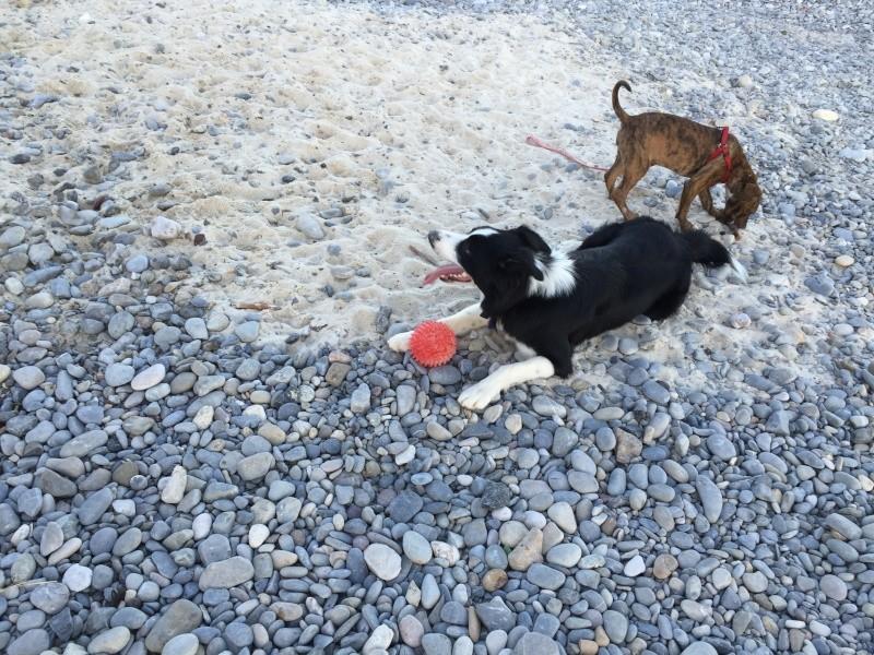 Haïvy et Jumper à la plage  Img_6010