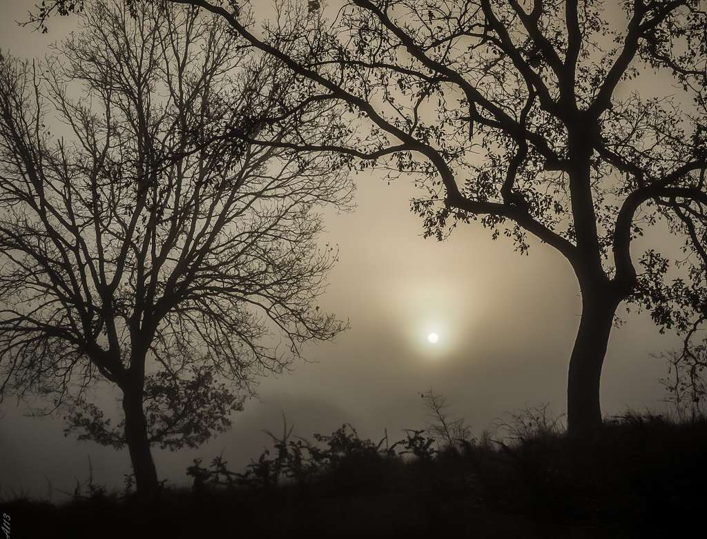 Sortie de brouillard Brouil11