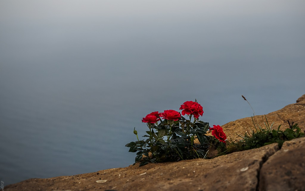 Grosse brume sur les crêtes Roses10