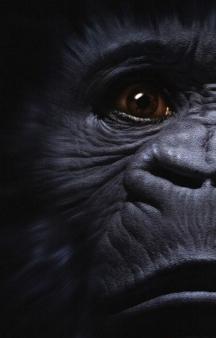 7°eme chevauchée des Dragons de Vaires Kongo10