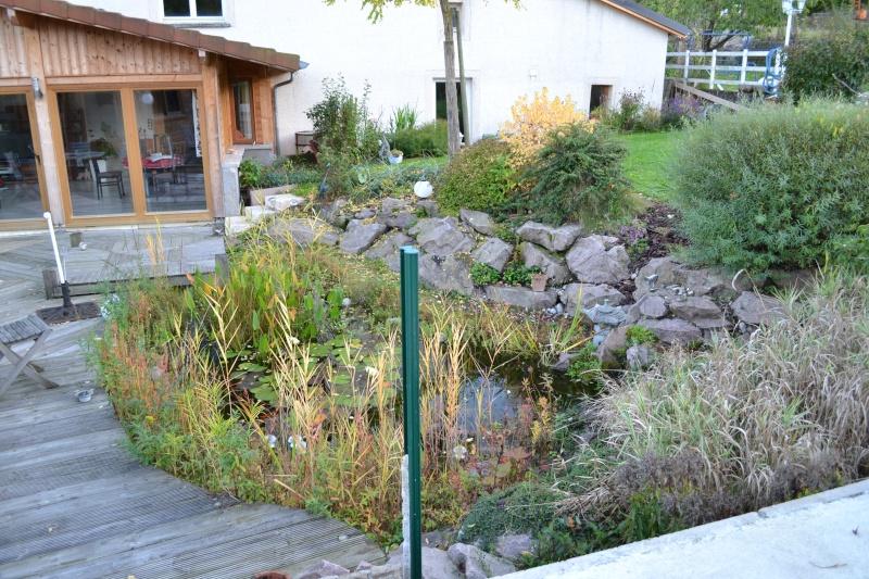 Un étang au jardin puis deux Dsc_0019