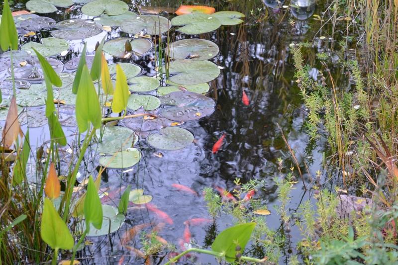 Un étang au jardin puis deux Dsc_0020