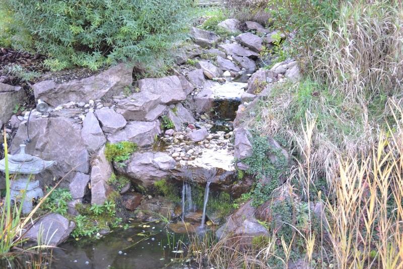 Un étang au jardin puis deux Dsc_0022