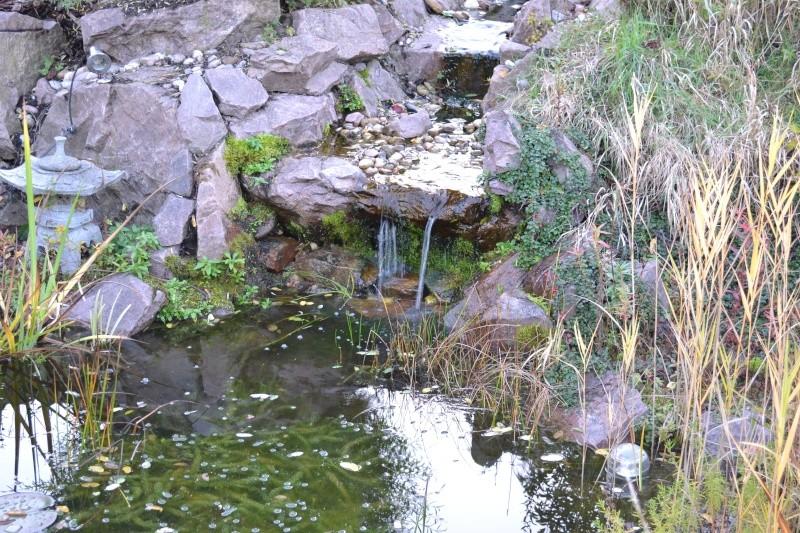 Un étang au jardin puis deux Dsc_0023