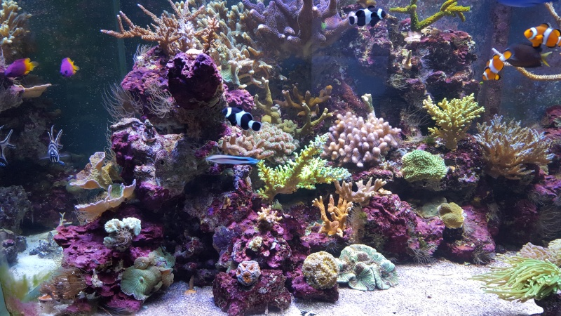 mon reef - Page 6 20160110