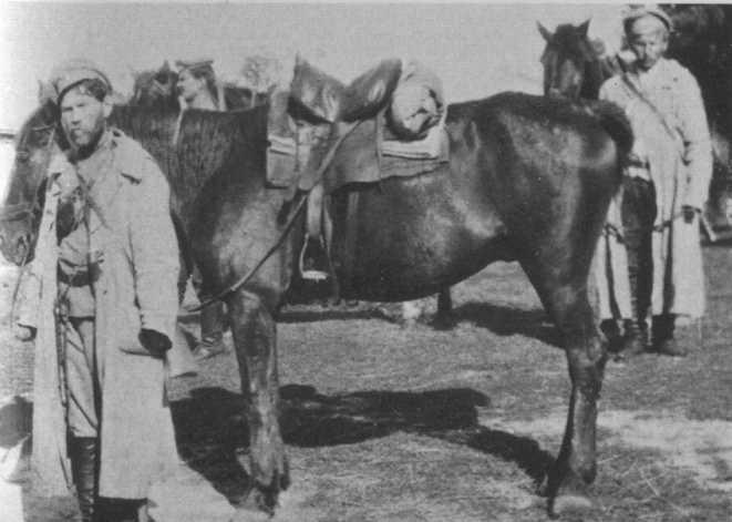 La cavalerie Don_co10