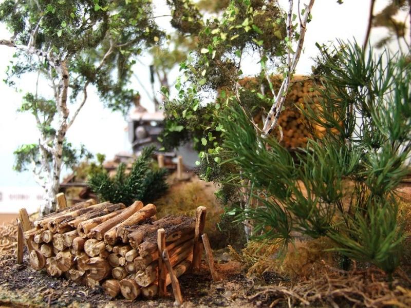 Sur la ligne forestière Contaut le Huga Ancien11