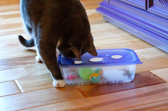 Idées et astuces pour Chiens et chats! 12301611