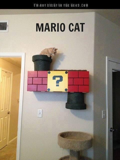 Idées et astuces pour Chiens et chats! 12308410