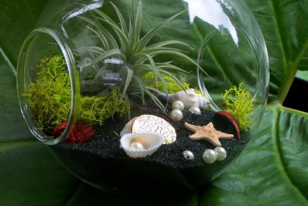 Minis jardins! Voici quelques modèles! Il_ful11