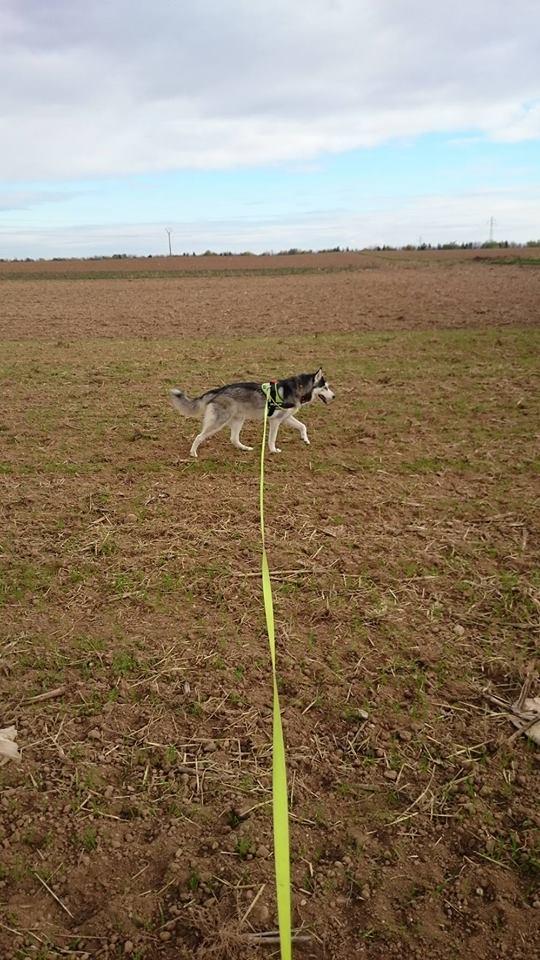 Ivan, mâle Husky 1 ans ASS039 12205010