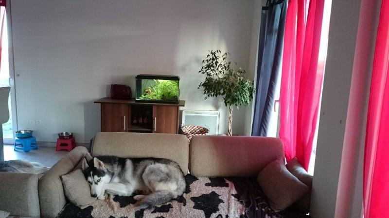 Ivan, mâle Husky 1 ans ASS039 12211210