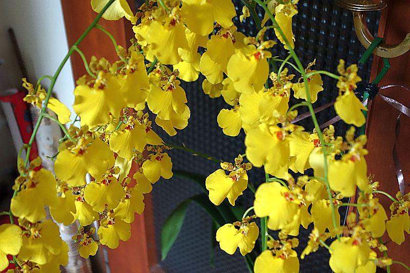 Orchideen 2 (fortlaufende Seiten 200 bis 300) Dsc01913