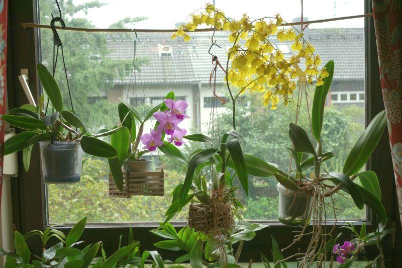 Orchideen 2 (fortlaufende Seiten 200 bis 300) - Seite 3 Dsc02010