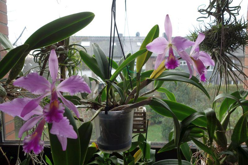 Orchideen 2 (fortlaufende Seiten 200 bis 300) Dsc02537