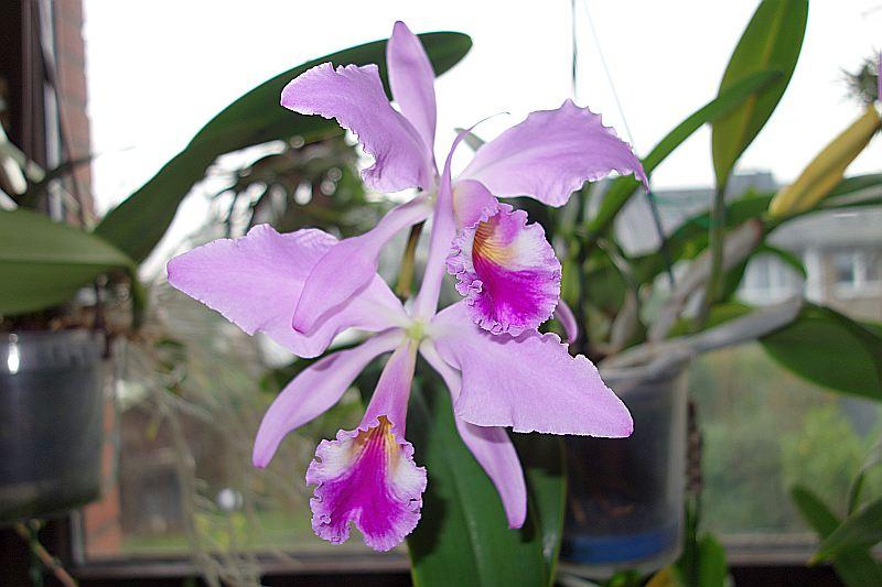 Orchideen 2 (fortlaufende Seiten 200 bis 300) Dsc02538