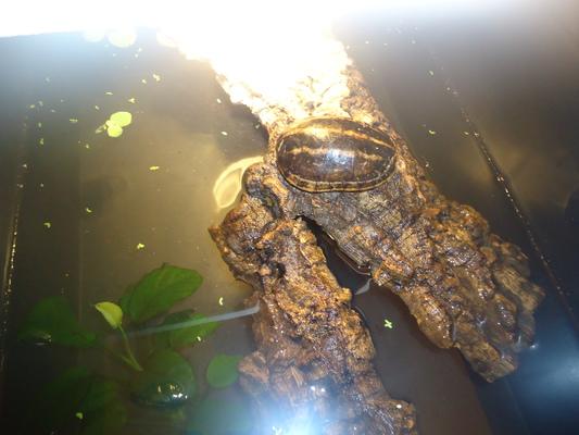 Mes tortues (CID) - Page 16 Bloggi16