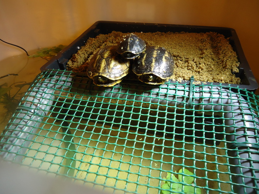 Mes tortues (CID) - Page 16 Bloggi17