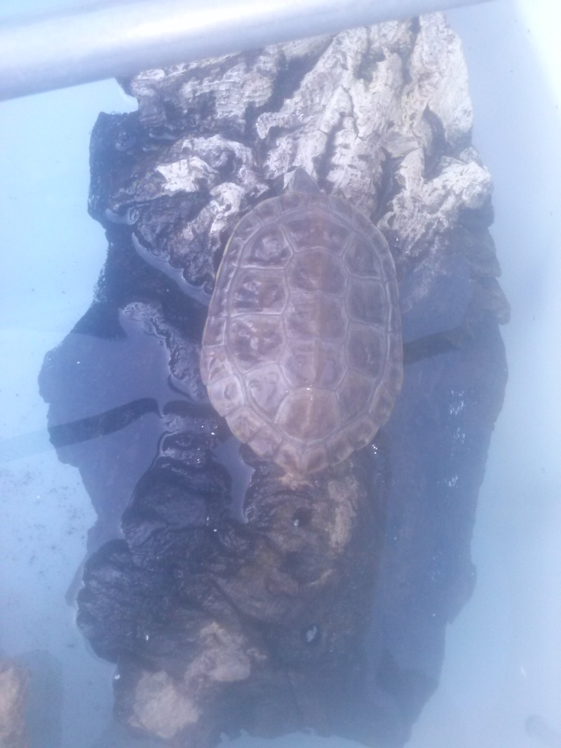 Mes tortues (CID) - Page 16 Cam01910