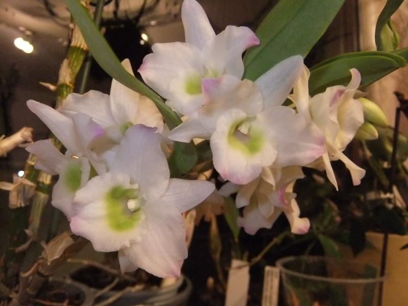 Orchideen 2 (fortlaufende Seiten 200 bis 300) - Seite 4 Dscf1912