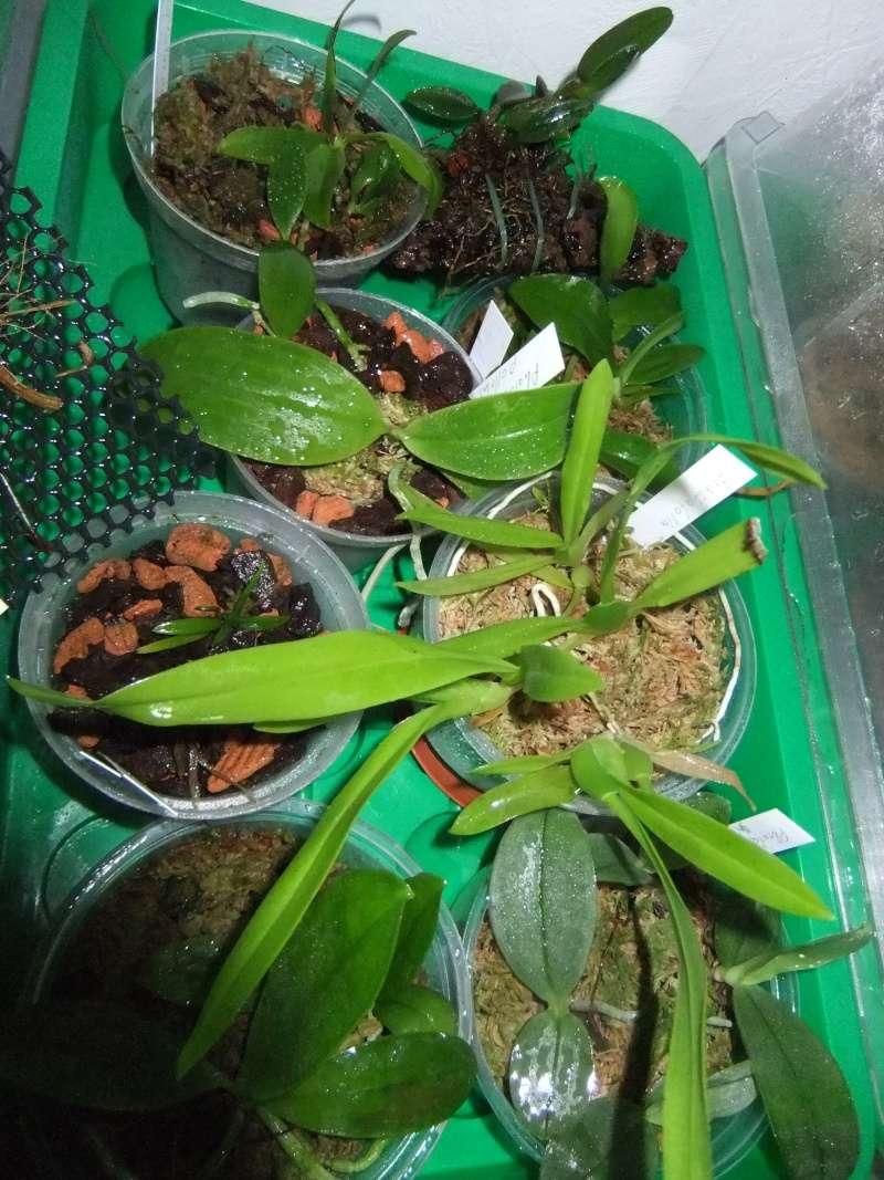 Orchideen 2 (fortlaufende Seiten 200 bis 300) - Seite 4 Dscf1921