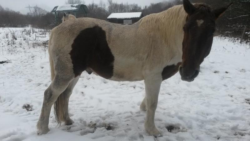 CALINOU  - ONC poney - né en 1999 - adopté en novembre 2012 par Stéphanie - Page 6 2015-121