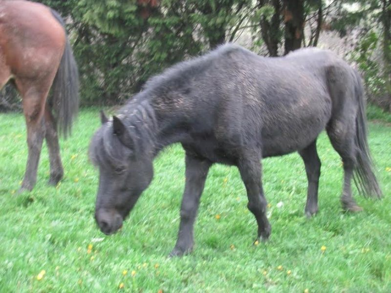 CHARLIE - ONC poney née en 1999 - adoptée en janvier 2013 par mammiemitsou - Page 3 Sans-t82
