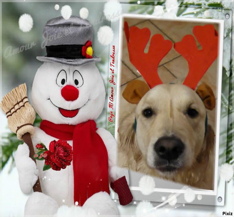 Concours photos de vos chiens, chats à l'occasion des fêtes de fin d'année Df921710
