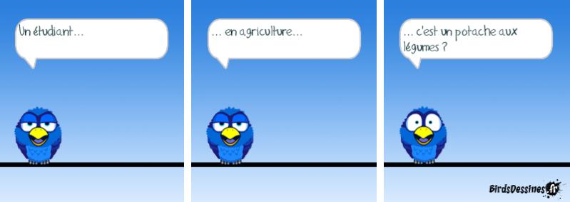 Quelques Birds ? Pas_d_11