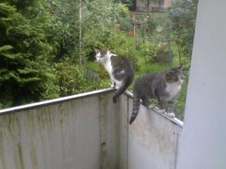 Relaunch Katzenmotel - mit Halbpension 11092010