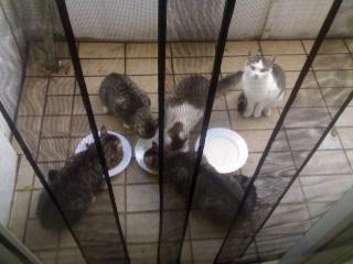 Relaunch Katzenmotel - mit Halbpension 11092011
