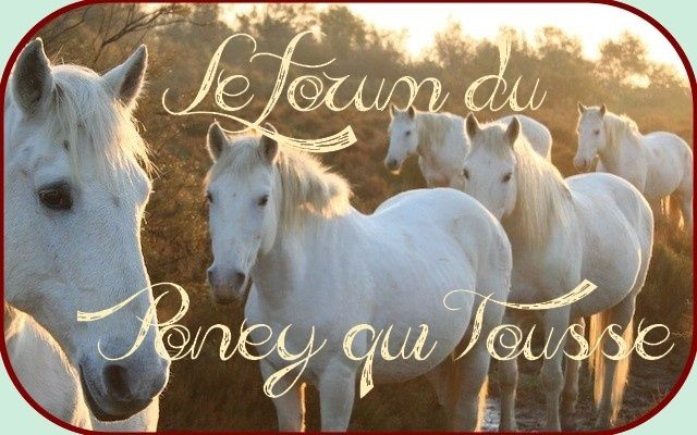 Forum du Poney qui tousse