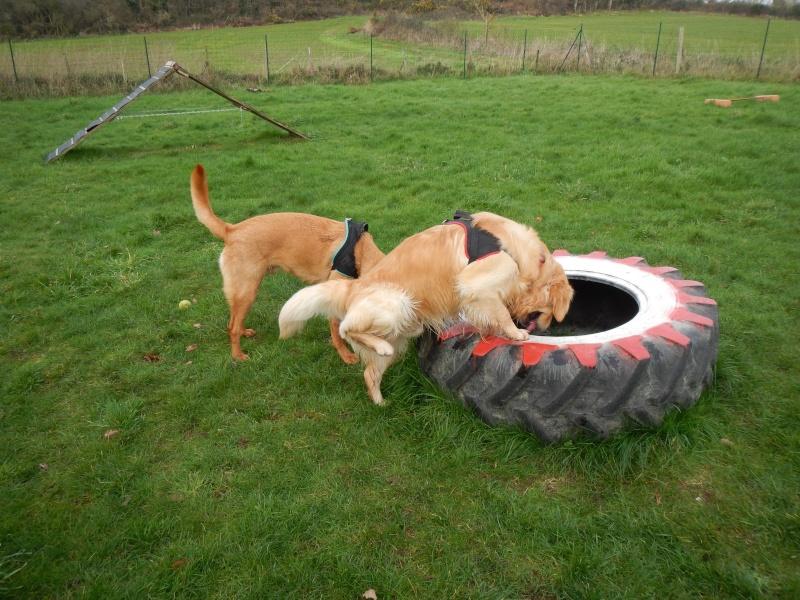 Cani-vacances en Bretagne: une semaine au gîte Ki-Mor + activités canines Dscn1915