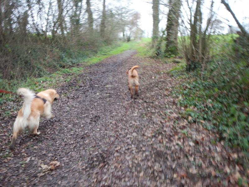 Cani-vacances en Bretagne: une semaine au gîte Ki-Mor + activités canines Dscn1916
