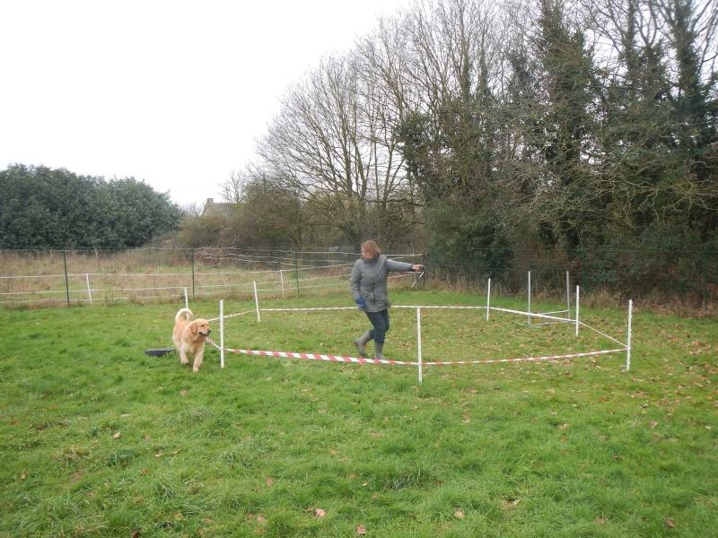 Cani-vacances en Bretagne: une semaine au gîte Ki-Mor + activités canines Dscn1917