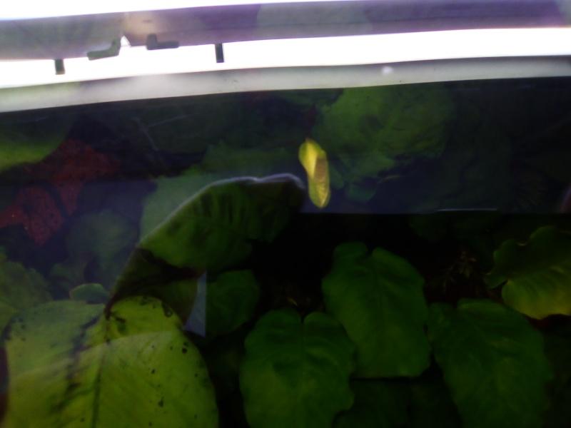 aquarium Img_2012
