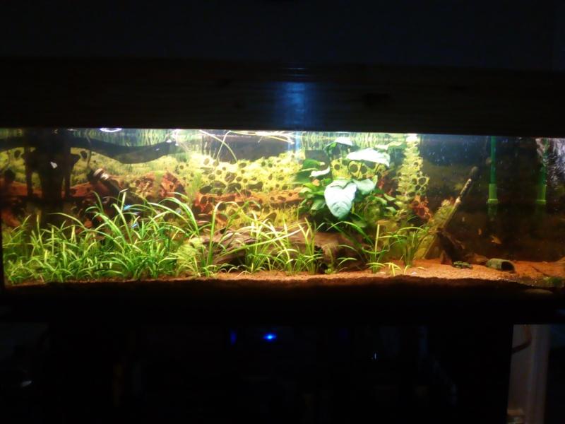 aquarium Img_2017