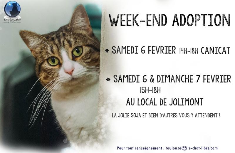 [ Adoptions ] Tous les samedis 14h - 18h chez CANICAT  - Page 2 Soja-i10