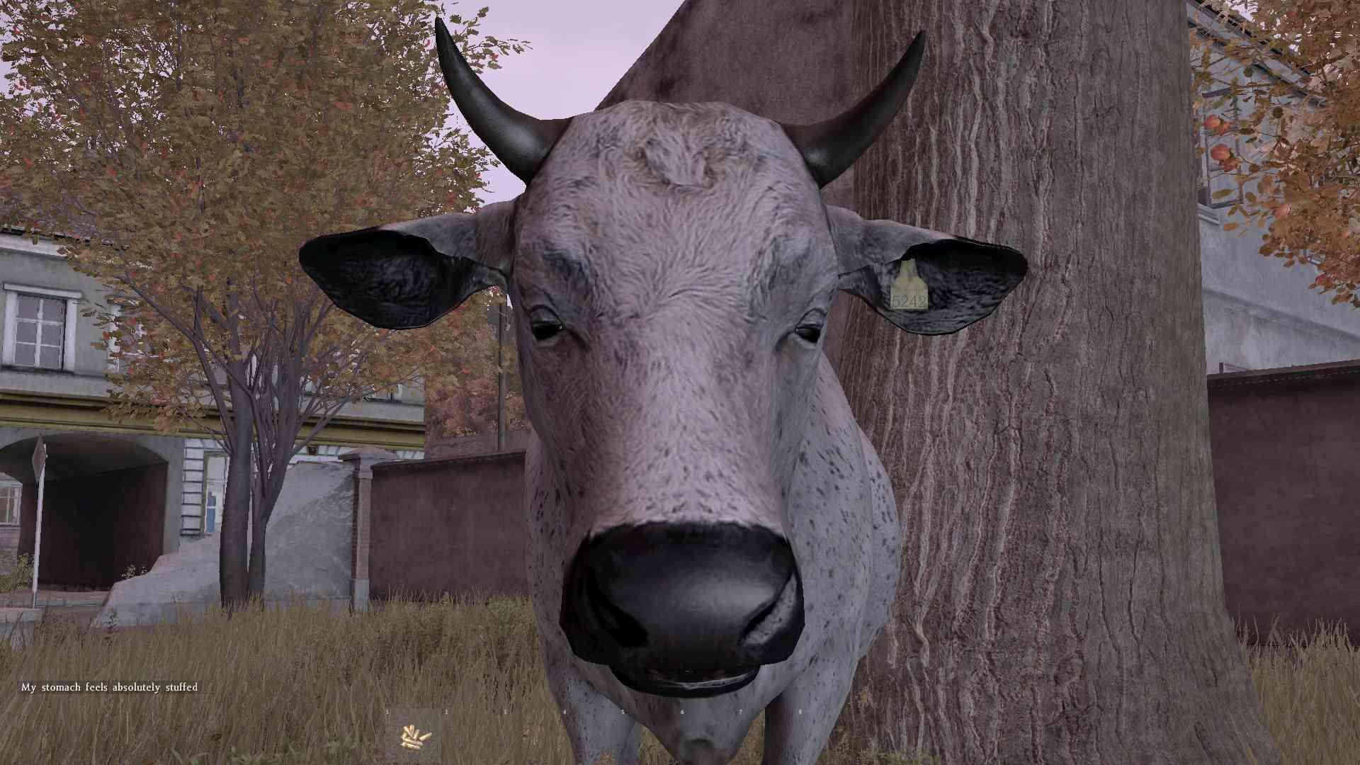 Les vaches sont numérotées ! 12672210