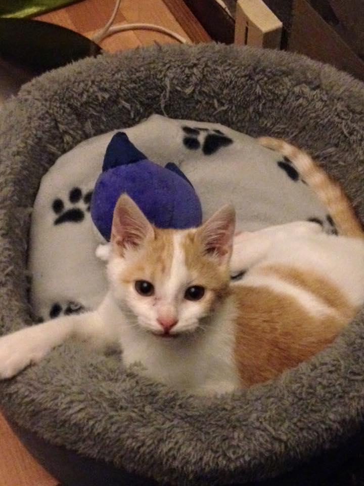 Zelda, le petit chaton d'isa  12345410