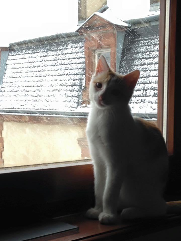 Zelda, le petit chaton d'isa  12400910