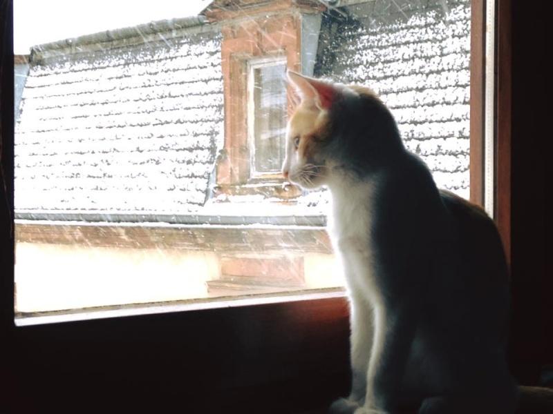Zelda, le petit chaton d'isa  12400911