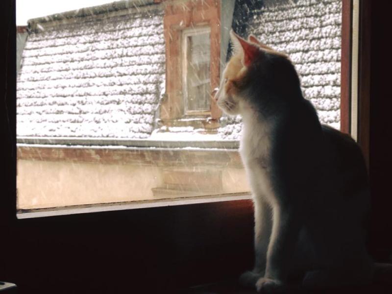 Zelda, le petit chaton d'isa  12512710