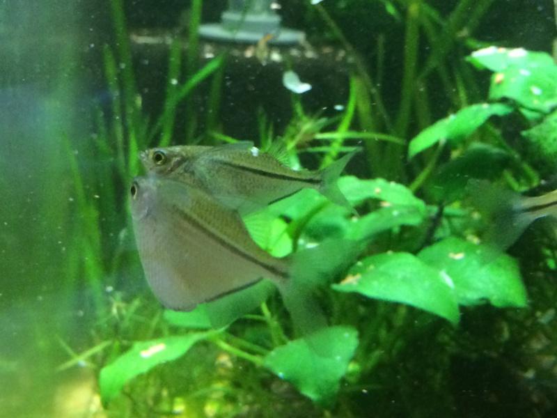 Identification poissons hachette Image16