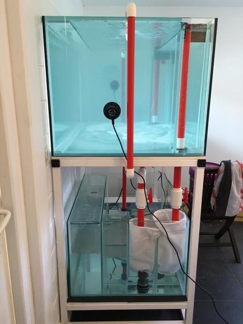 Nouvelle Maison / Nouveau projet : Alexpilon's reef tank 3 - Page 3 Img_0720