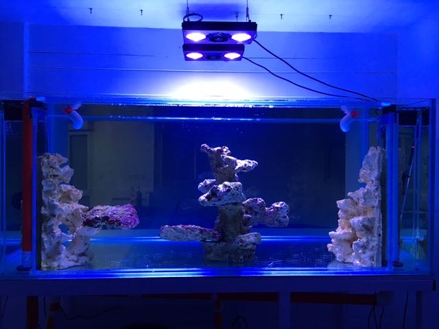 Nouvelle Maison / Nouveau projet : Alexpilon's reef tank 3 - Page 3 Img_0811